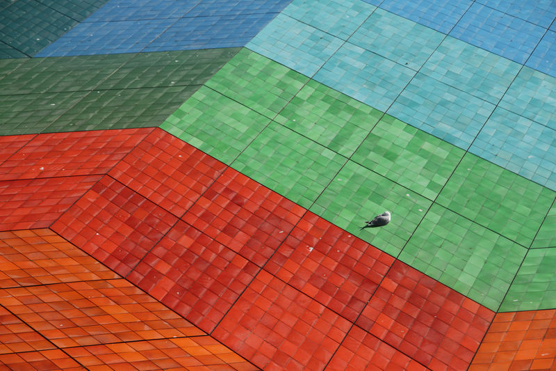 Brightly colored roof tiles with a seagull sleeping on it Day Close-up Built Structure Architecture 2018 In One Photograph Roof City Modern Tiles Building Red Outdoors Seagull Pattern Tile No People Red Color Green Color Blue Color High Angle View Building Exterior