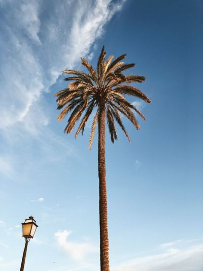 Palma de Mallorca, Spain Lantern Street Light Beauty In Nature Blue Sky Cloud - Sky Day Evening Sun Low Angle View Nature No People Outdoors Palm Leaf Palm Tree Paradise Plant Scenics - Nature Sky Tree Tropical Climate