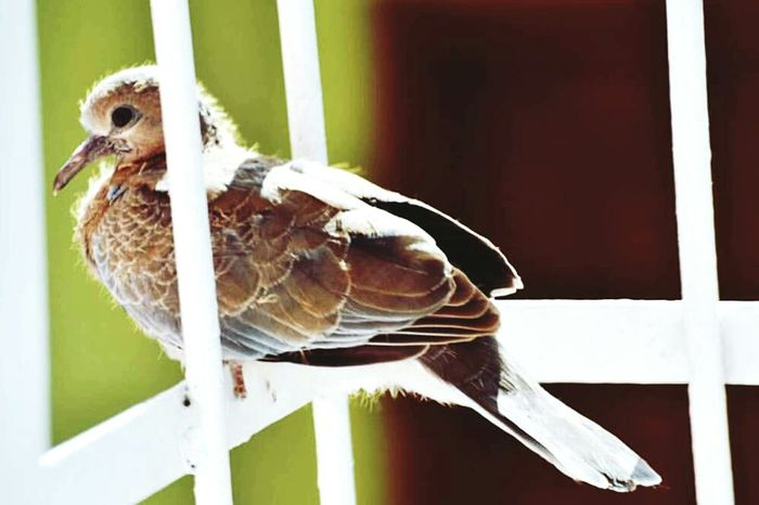 Bird Communication Close-up No People Day Sunny Day Misafirimiz Minikkuşum😊 EyeEmNewHere Summertime EyeEm Selects Nature Outdoors The Week On EyeEm