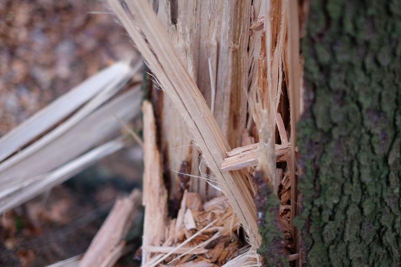 Broken Damaged Fallen Fallen Tree Forest Nature Tree