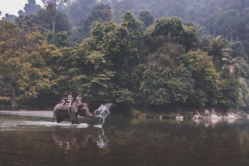 People riding elephant in lake against trees