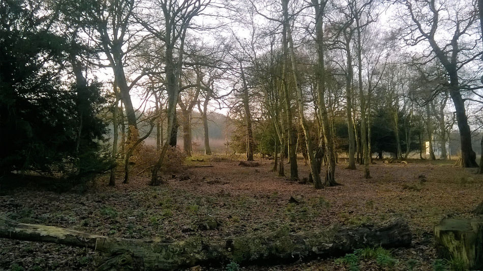 Trentham Gardens Winter Beauty In Nature Day Forest Growth Landscape Nature No People Outdoors Scenics Tranquil Scene Tranquility Tree Winter Woodland