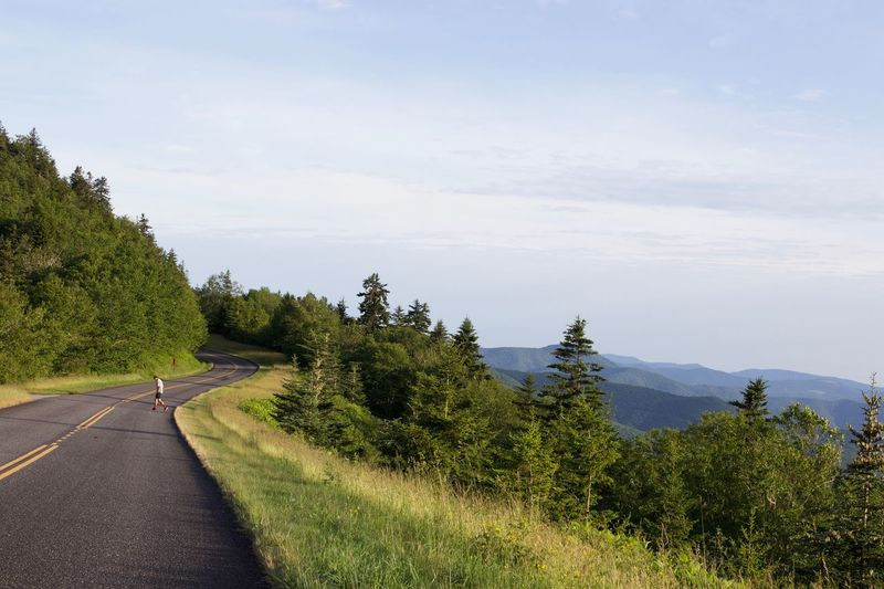 Mountain side escape Plant Tree Sky Road Transportation Nature Growth Tranquility Scenics - Nature Outdoors No People Green Color Sunlight Non-urban Scene Direction Cloud - Sky Beauty In Nature Tranquil Scene Day