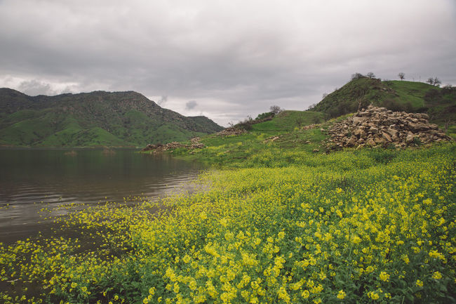 Beauty In Nature Cloudy Day Flood Flooded Flower Flowers Hills Lake Lake Kaweah Landscape Mountain Mountain Range Nature Nature No People Outdoors Scenics Sky Tranquil Scene Tranquility Tree Water California Dreamin