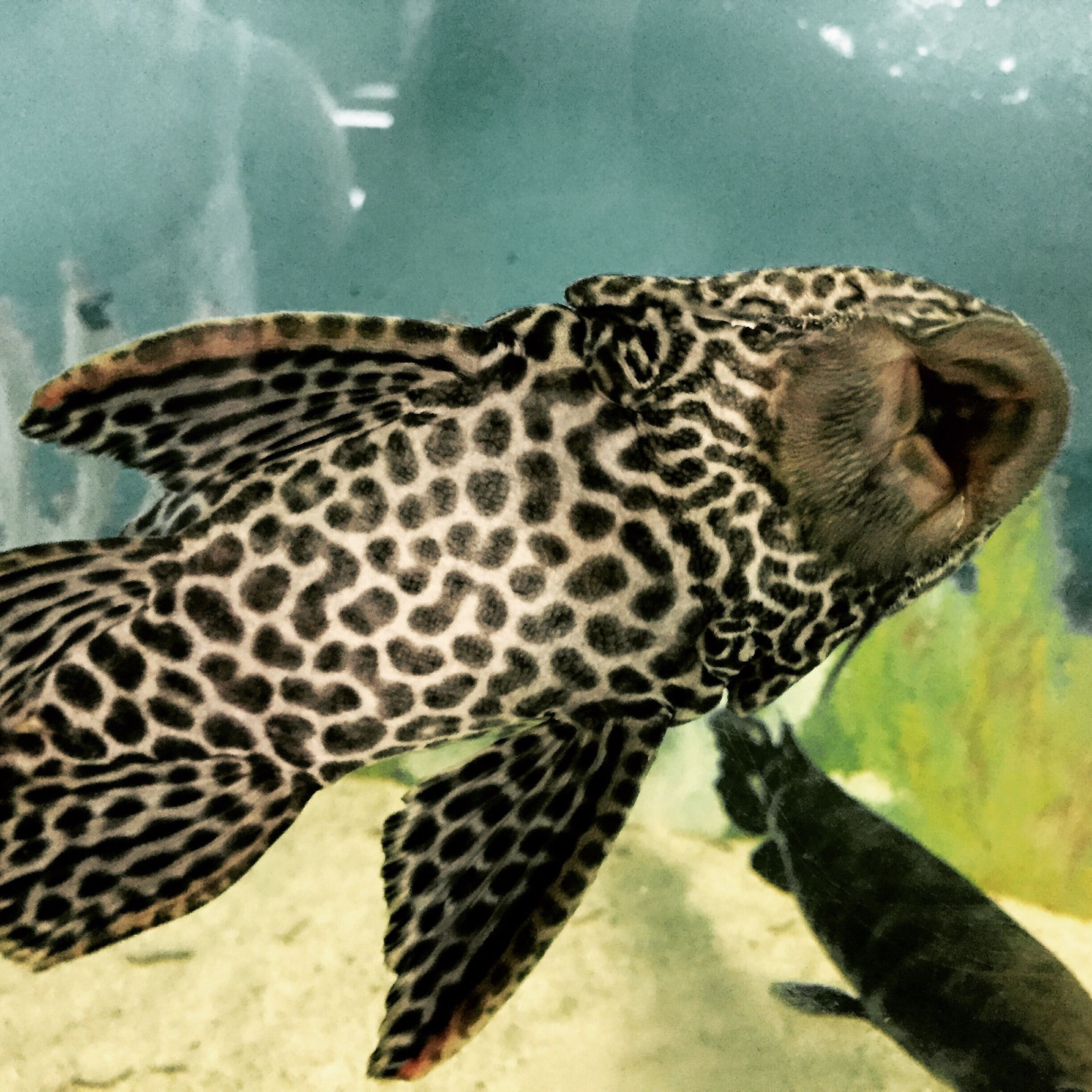 animal themes, animals in the wild, wildlife, one animal, animal markings, underwater, animals in captivity, natural pattern, nature, swimming, sea life, close-up, mammal, two animals, side view, zoology, water, sunlight, zoo, day