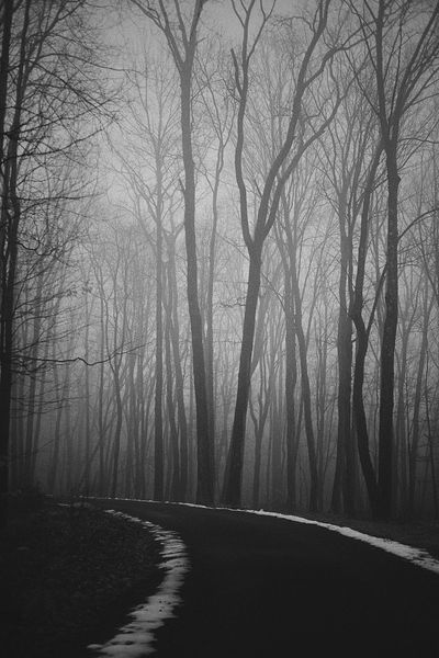 The Way Forward Tranquility Road Nature Tranquil Scene Fog Forest Beauty In Nature Winter Landscape