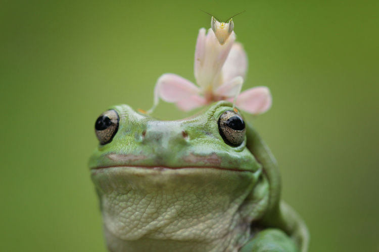 Amphibian Animal Animal Body Part Animal Eye Animal Head  Animal Themes Animal Wildlife Animals In The Wild Close-up Day Flower Focus On Foreground Frog Green Color Nature No People One Animal Outdoors Plant Plant Part Selective Focus Vertebrate