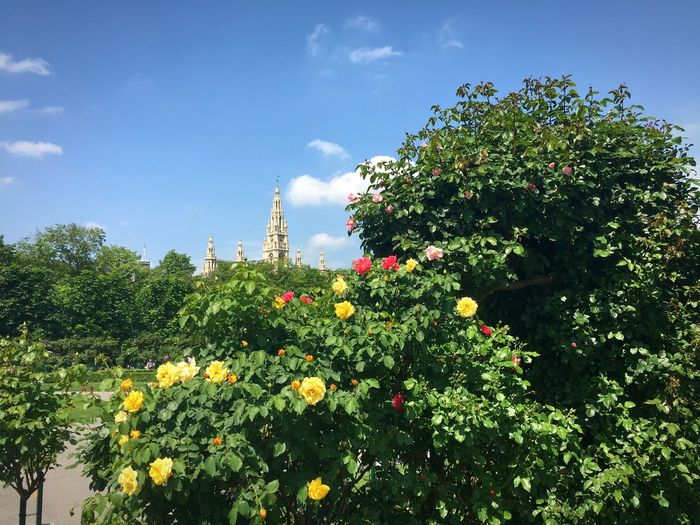 Plant Growth Sky Flower Flowering Plant Tree Nature Architecture Vulnerability  Sunlight No People Freshness Cloud - Sky Built Structure Outdoors Green Color Beauty In Nature Low Angle View Fragility Day