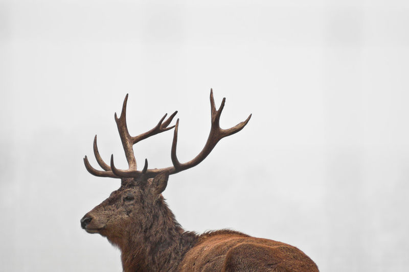 Low angle view of deer against sky