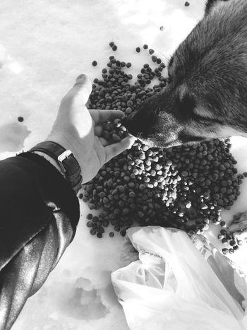 Dogslife Food Mercy  Awareness