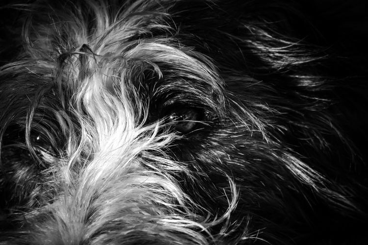 Close-up portrait of a dog