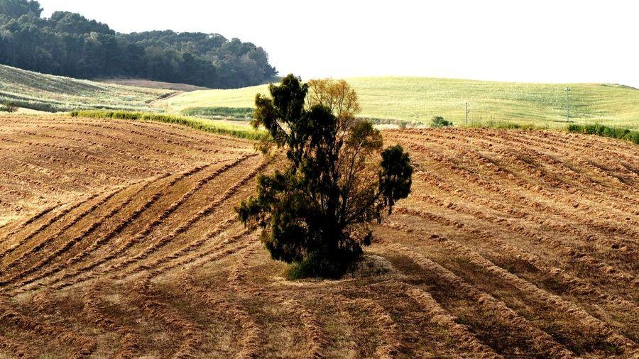 EyeEm Selects Tree Rural Scene Agriculture Field Plowed Field Sky Landscape