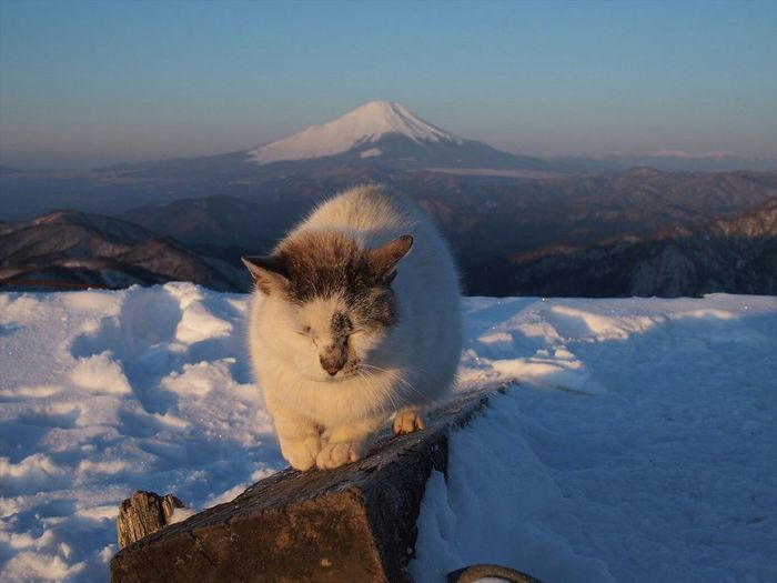 Cat Sitting On Wooden Plank Over Snow Covered Field Against Sky