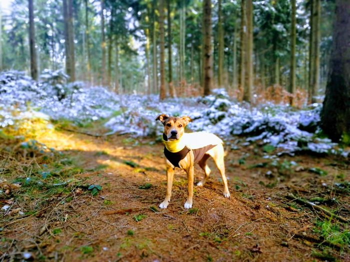 Hund Landschaft Dog One Animal Animal Forest Tree Pets Outdoors Day Domestic Animals Animal Themes Nature No People Looking At Camera Love Yourself