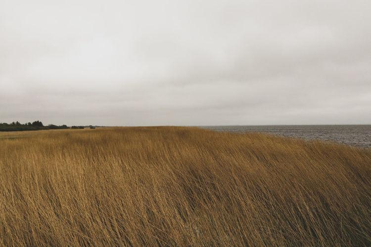 Danish Fjord