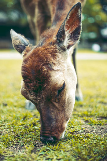 Animal Themes Close-up Day Deer Dog Domestic Animals Field Focus On Foreground Grass Japan Japan Photography Mammal Nara Nature No People One Animal Outdoors Pets Street