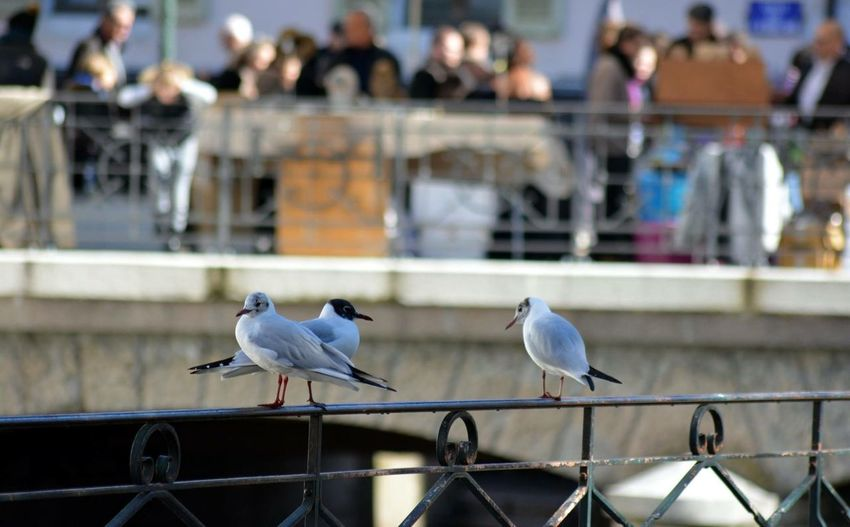 Side View Of Birds On Railing Against Blurred People