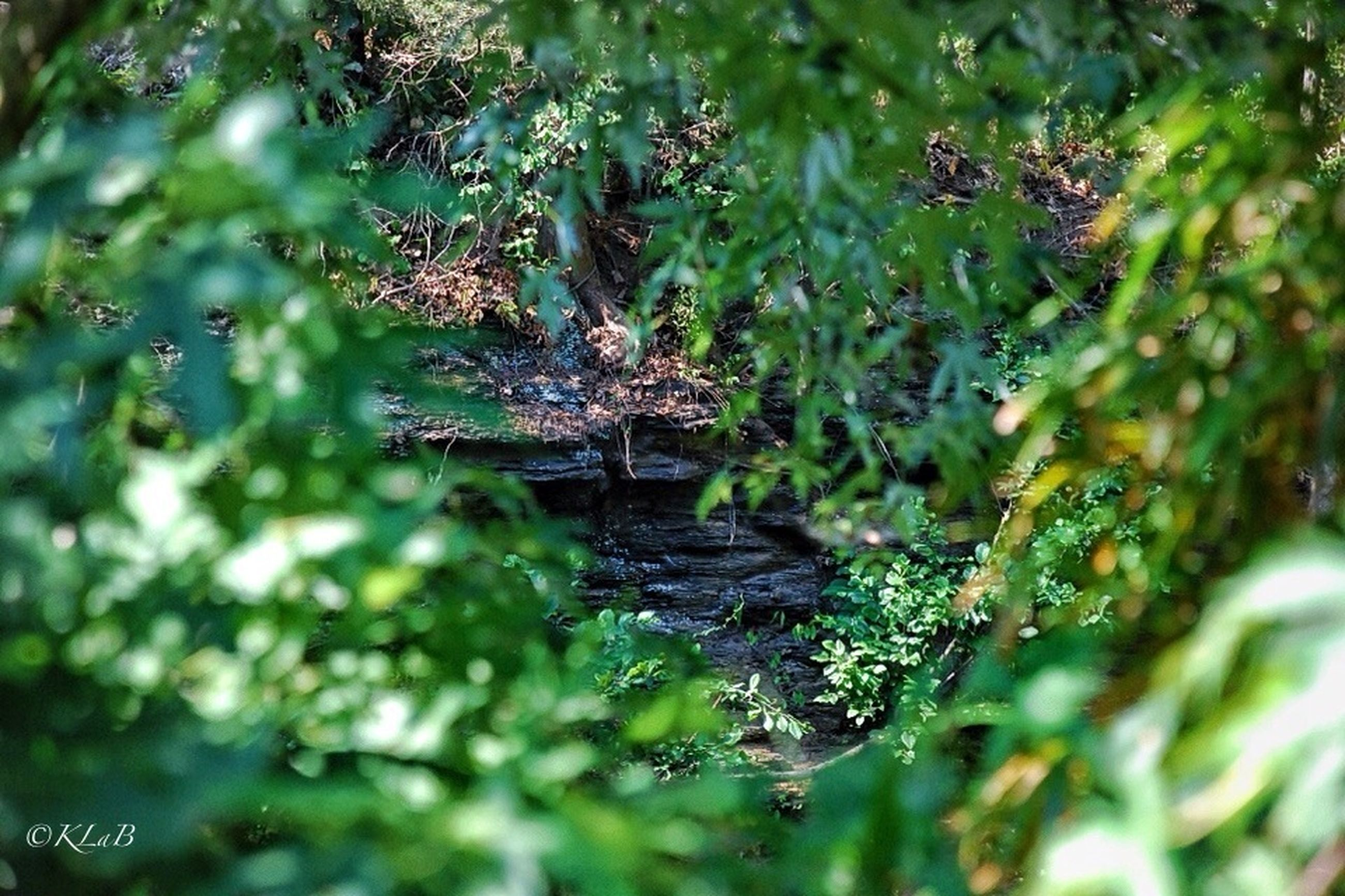 water, growth, leaf, plant, nature, green color, tree, reflection, selective focus, spider web, tranquility, wet, branch, close-up, focus on foreground, beauty in nature, day, outdoors, no people, drop