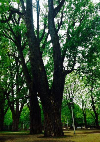 Tree Park Summer Sunday SundayFunday Soaking Up The Sun Break