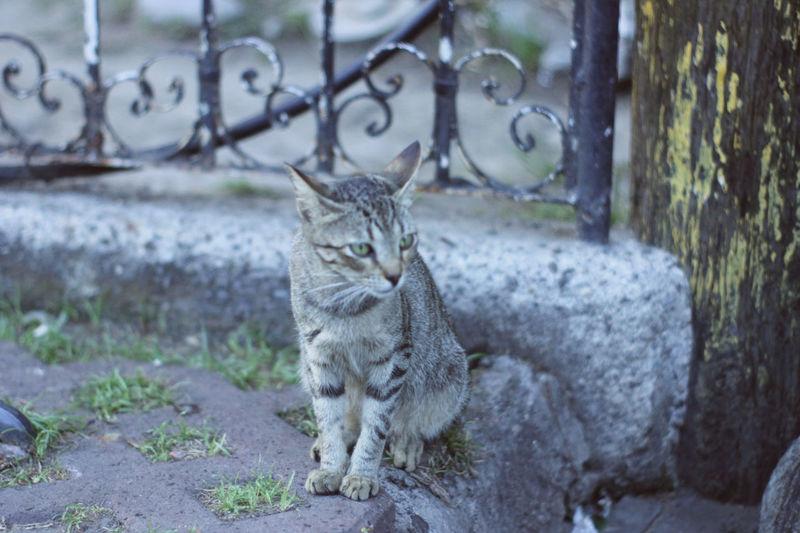Animal Animal Themes Cat Day Domestic Domestic Animals Domestic Cat Feline Mammal No People Pets Vertebrate Whisker