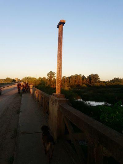 Ponte Ponte Animal Animal Themes Travel Destinations Tree One Animal Outdoors Sky