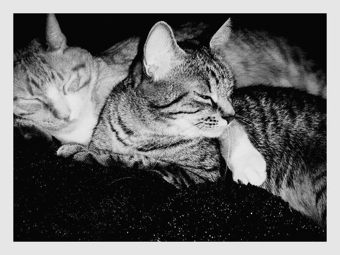 Cat♡ Mes Chatons ♥ Meus Gatinhoss ❤ Meusbabys <3 Docoracao Black&white