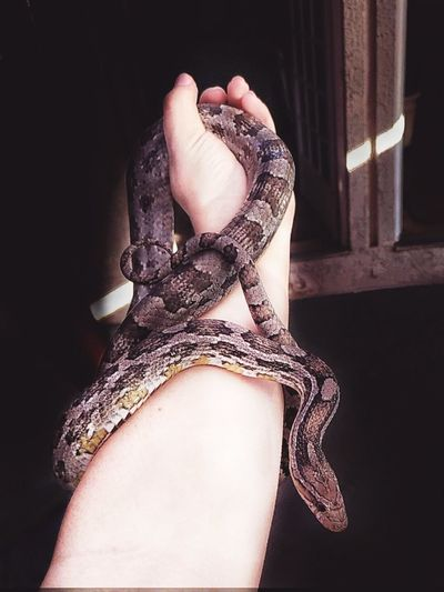 Bracelet Diana Snake Snakes Sweet Animal Newfriend Selvagem Wild Wildlife & Nature Wildlife Photography