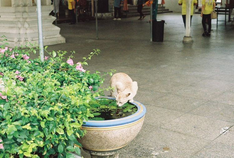 🐈 Animal Cat Filmcamera 35mm Film Film Film Photography 35mm Pentax MV-1 Plant Growth Nature Potted Plant Flower Day Flowering Plant Green Color Water Beauty In Nature