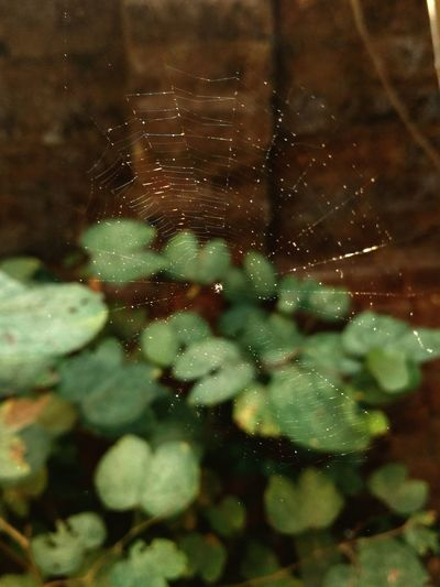 Reflection Animal Themes Close-up One Animal Looking Through Window Nature Water Day No People Outdoors Abstract Spiderweb Web Spider Sunlight Adapted To The City