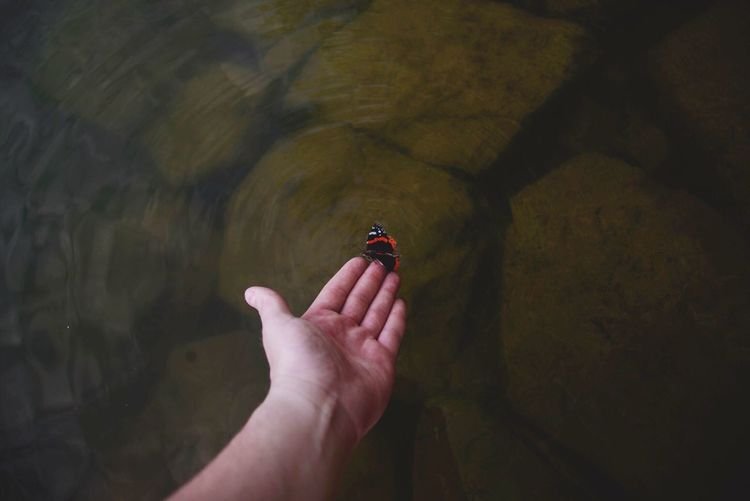 Human hand touching butterfly