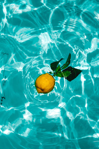 Lemos in the water, Arcos de Valdevez, Portugal Water Swimming Pool Sea Swimming Rippled Fruit Close-up Splashing Droplet Citrus Fruit Colliding Leaking Tangerine Sour Taste Grapefruit Lemon Blob Lemonade Lemon Soda Lily Pad Zest Lime Peel Juicer Vitamin C Lemon Tree Floating On Water Orange Tree Orange - Fruit High-speed Photography Blood Orange