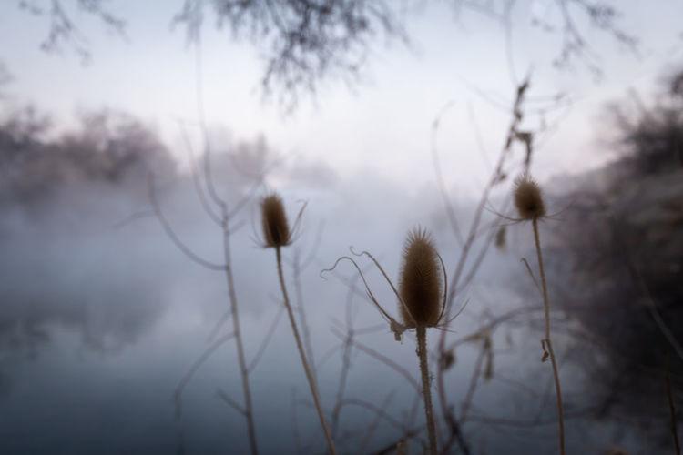 15 degrees. Fog
