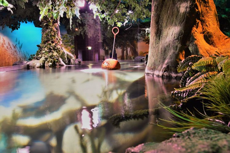 Forest Nature No People Reflection Sealife Munich Sealifeaquarium Sealifecentre Tree Trees Water Water Surface