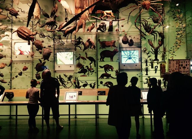 Biodiversity Biology Taxidermy American Museum Of Natural History Animals Museum EyeEm Best Shots The Best Of New York New York NYC