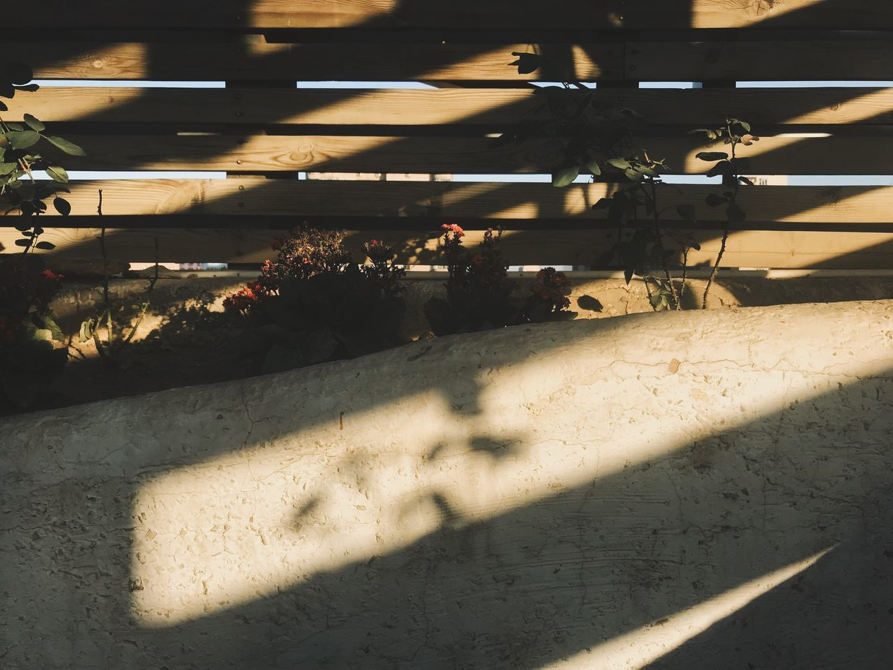 sunlight, shadow, nature, architecture, day, built structure, high angle view, no people, outdoors, city, plant, standing, wall - building feature, occupation, window, focus on shadow