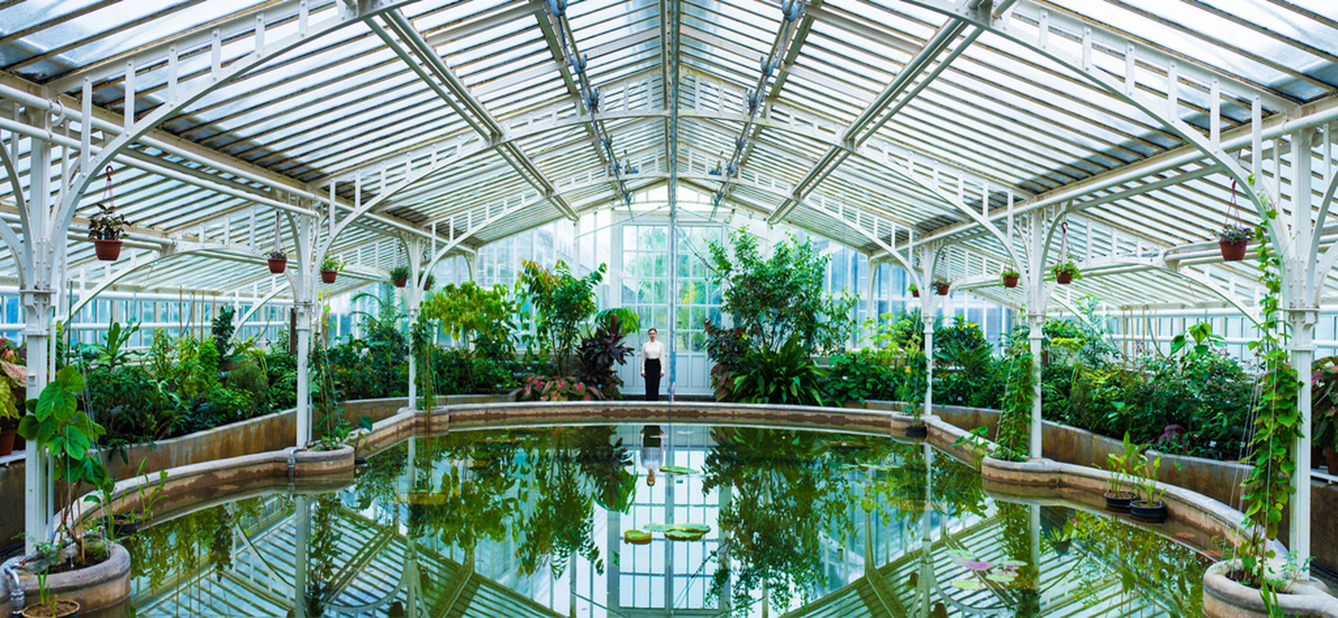 indoors, built structure, ceiling, architecture, railing, water, reflection, tree, plant, day, glass - material, greenhouse, no people, growth, potted plant, nature, arch, empty, window, pattern