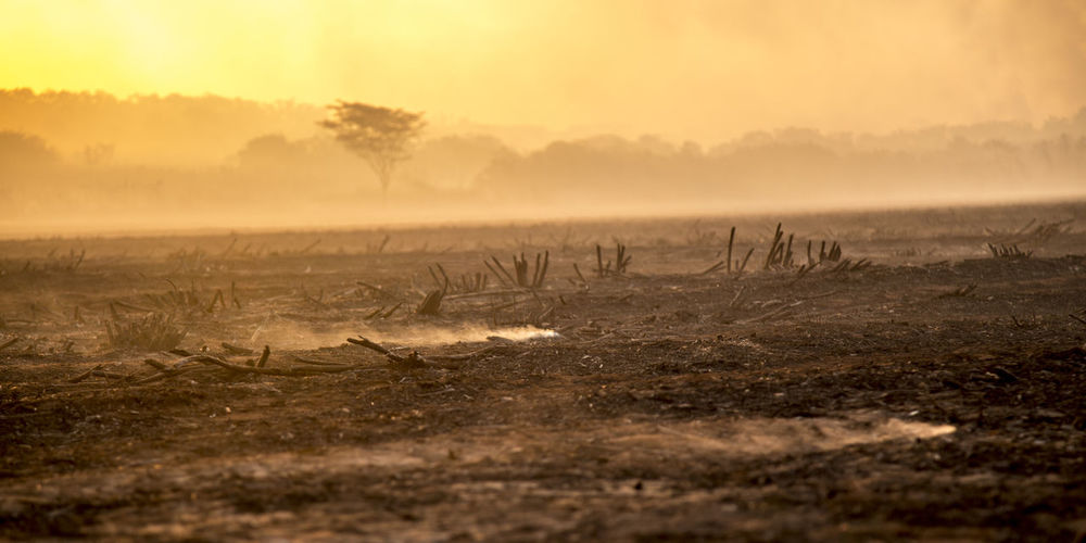Burning Field Firefighter Flames Smoke Accidents And Disasters Burn Cane Crop  Destroy Fire First Eyeem Photo Plantation Sugar Cane Sunset