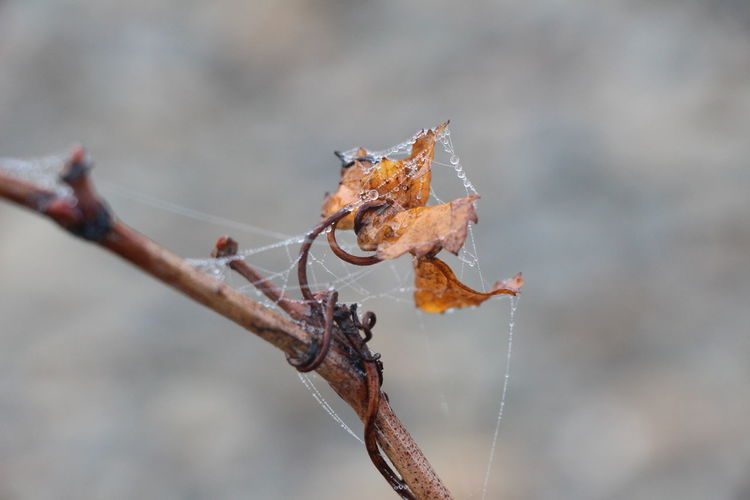 🍂 Focus On Foreground Frozen Leaf Nature Outdoors Photography Wine Winter