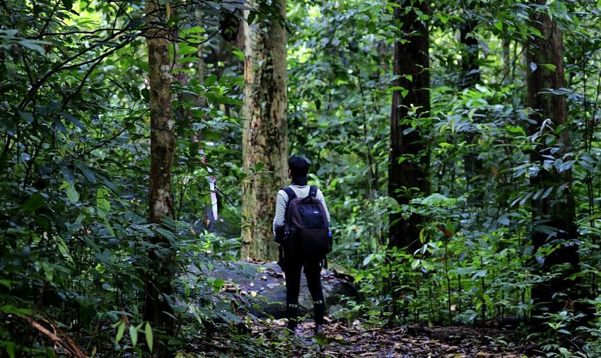 Inforest The Art Of Street Photography Tree Tree Area Full Length Adventure Forest Hiking Men Backpack Exploration Rear View Hiking Pole Tree Canopy  Explorer Eco Tourism Hiker Tropical Rainforest Rainforest