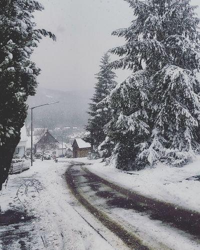 Village Snowing Nature Cold Temperature Landscape_Collection Tree Snow ❄ Snow Winter Landscape Mountain Wonderlust Wonderfull