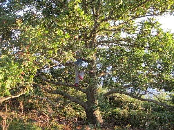 climbing Tree Trees Climbing TreePorn Tree_collection  Tree Porn Treelovers Beauty In Nature Day Green Green Color Nature Climbing Climb Up! Nature Photography FamilyFun  Outdoors Plant Sunny Climbing Trees Kids Having Fun Kids Playing Kids At Play Climbing A Tree Climb Growth