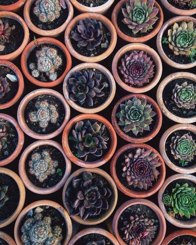 Full Frame Shot Of Potted Succulent Plants