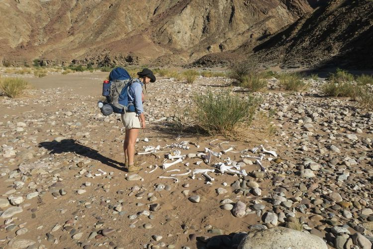Female hiker looking at animal bones Adventure Arid Climate Backpack Bag Bones Desert Explore Hiking Landscape Let's Go. Together. Mountain Namibia Nature One Person Outdoor Photography Outdoors Rock - Object Sand Skeleton Standing Travel Walking Wilderness Women