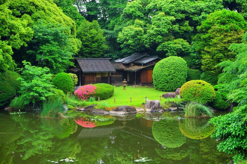 Nature Tree Green Color Japanese Garden Lake EyeEmNewHere The City Light Lieblingsteil Waterfront Reflection Water Reflections Art Is Everywhere TCPM Break The Mold Neighborhood Map The Street Photographer - 2017 EyeEm Awards The Architect - 2017 EyeEm Awards The Great Outdoors - 2017 EyeEm Awards The Photojournalist - 2017 EyeEm Awards The Portraitist - 2017 EyeEm Awards