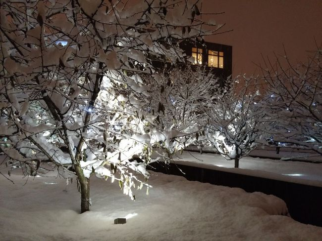 Moscow Neve Russia Taganka Architecture Beauty In Nature Belezza Biancaneve Branch Building Building Exterior Built Structure Cherry Tree Cold Temperature Illuminated Inverno Nature No People Plant Snow Tree Winter #urbanana: The Urban Playground EyeEmNewHere