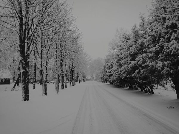 Snowy road. Snow Cold Temperature Winter Tree Snowing Forest Nature Landscape No People Fog Outdoors Day Lithuanian Nature Willage Simple Photography Photography Bare Tree Road Simple Like Followme