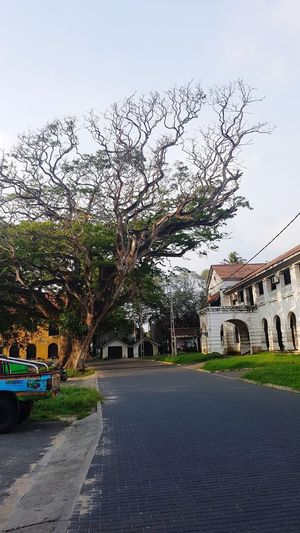 Built Structure Architecture Travel Destinations Street Tourism Destination Tourism Historical Galle Fort Dutch Fort Sri Lanka Old Tree Building Exterior