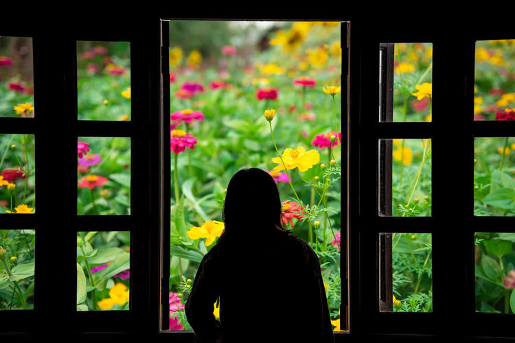Rear view of silhouette woman looking at window