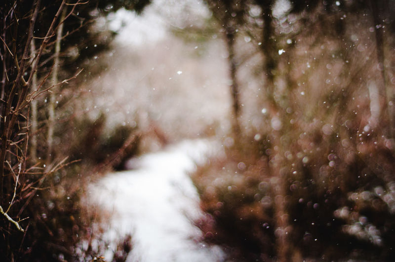 Dreamy Freelensing No People Nature Tree Plant Day Selective Focus Beauty In Nature Outdoors Winter Cold Temperature Water Snow Tranquility Growth Close-up Land Snowing Motion Path In Nature Pattern Forest Forest Walk Focus On Foreground