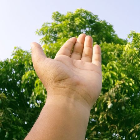 take my hand Human Hand Tree Close-up Wrist Symbols Of Peace Peace Sign - Gesture Hand Sign Releasing